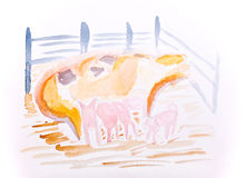 Pig with piglets water colour by Kay Gale Royalty Free Stock Photos