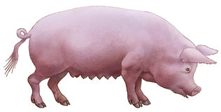Pig pink. Pig pink, thick and fat.An illustration on a white background Royalty Free Stock Image