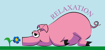 Pig. Pink pig lying and resting on the grass and smelling a flower Stock Photography