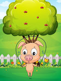 A pig playing skipping rope near the tree Stock Photo