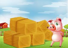 A pig pointing the farm crops Stock Images