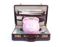 Pig and portfolio Stock Image