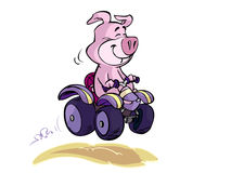 Pig on quad Royalty Free Stock Photos