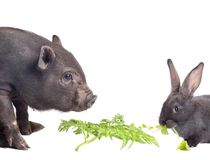 Pig and rabbit Royalty Free Stock Photo