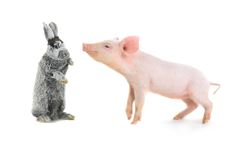 Pig and rabbit Stock Images