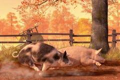 Pig Race stock illustration