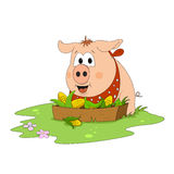 Pig ready to eat Royalty Free Stock Photography