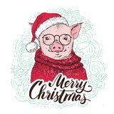 Pig in a red cardigan, in a Santa`s red cap . Marry Christmas - lettering quote. Christmas card, poster, t-shirt vector illustration