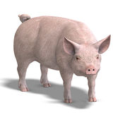 Pig render. Rendering of a pig with shadow and clipping path over white Royalty Free Stock Photo