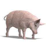 Pig render Royalty Free Stock Photography