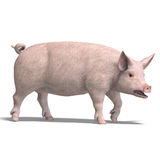 Pig render. Rendering of a pig with shadow and clipping path over white Royalty Free Stock Images