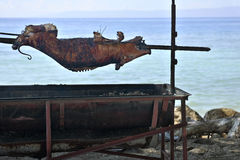 Pig Roast by the Water Stock Photography