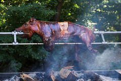 Pig roasted on fire outside. Pig roasted on barbecue fire outside Royalty Free Stock Image