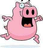 Pig Running Royalty Free Stock Photography