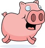 Pig Running Royalty Free Stock Photo