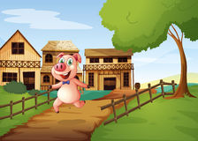 A pig running happily Royalty Free Stock Image