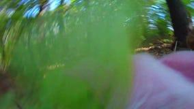 Pig runs on wood stock footage