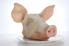 Pig's head on a plate royalty free stock image