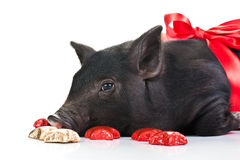 A Pig's life Stock Photo