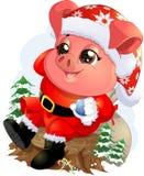 Pig in santa costume Stock Photo