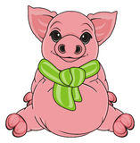 Pig in scarf Stock Images