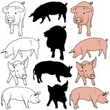 Pig Set. 01 - colored hand drawn illustration as vector Royalty Free Stock Photo