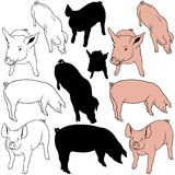 Pig Set. 02 - colored hand drawn illustration as vector Royalty Free Stock Photos
