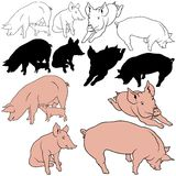 Pig Set. 03 - colored hand drawn illustration as vector Royalty Free Stock Photography