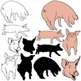 Pig Set. 04 - colored hand drawn illustration as vector Stock Photography