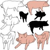 Pig Set. 05 - colored hand drawn illustration as vector Stock Image