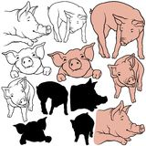 Pig Set. 07 - colored hand drawn illustration as vector Royalty Free Stock Image