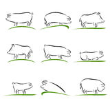 Pig set. Vector Royalty Free Stock Image