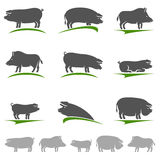 Pig set. Vector Stock Image