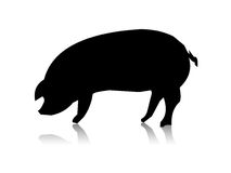 Pig silhouette. Pig black silhouette on the white back Stock Photo