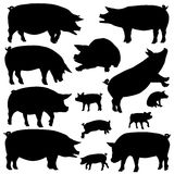 Pig Silhouettes Royalty Free Stock Photos