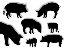 Pig silhouettes. Pig and wild boar silhouettes in different poses Royalty Free Stock Photos
