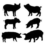 Pig silhouettes set. Vector illustration Stock Photography
