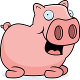 Pig Sitting Stock Photography