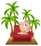 A pig sitting at the chair near the coconut trees Stock Images