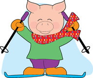 Pig Skiing. A Pig with Skis and Poles wearing a Scarf Stock Photography