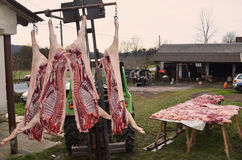 Pig slaughter, Pig killing time Royalty Free Stock Photo