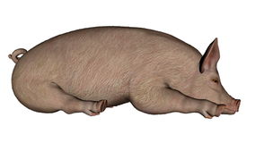 Pig sleeping - 3D render Royalty Free Stock Photos