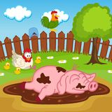 Pig sleeping in puddle Stock Images