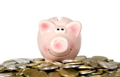 Pig is smiling and standing near money Stock Photo