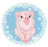 Pig and snowball. Cute pink piggy sit on the blue snowball with white snowflakes Stock Image