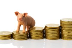 Pig on stack of coins Royalty Free Stock Photography