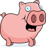 Pig Standing Stock Image