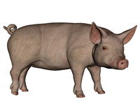 Pig standing - 3D render Royalty Free Stock Photography