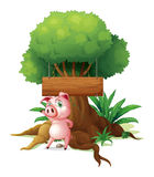 A pig standing in front of an empty wooden signboard Royalty Free Stock Photo