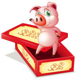 A pig standing inside a box Royalty Free Stock Photography